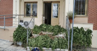 Σύλληψη δύο Ελλήνων για φυτεία δενδρυλλίων ινδικής κάνναβης!!!